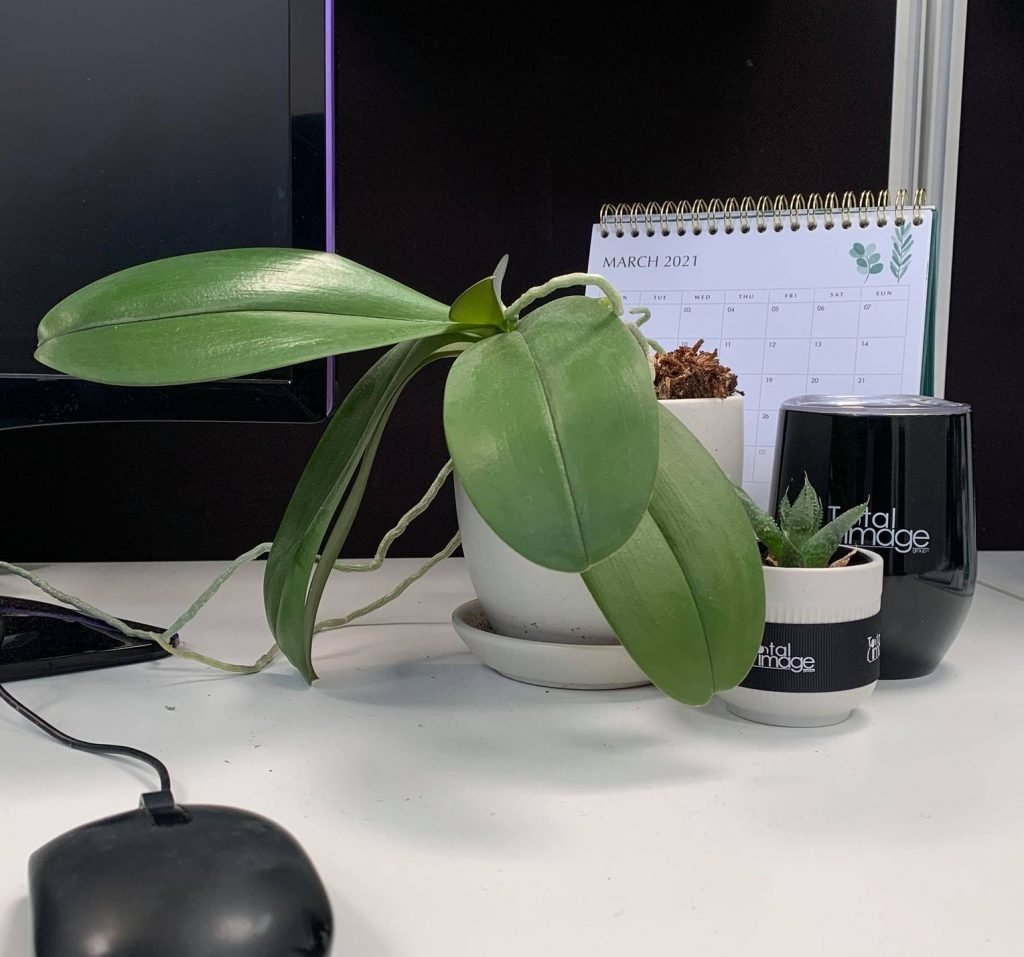 A plant pot on your office desk will improve air quality and productivity
